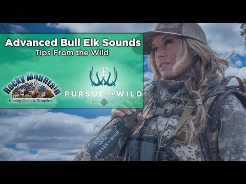 How To Master Elk Bugles with Kristy Titus- Elk Call Tips