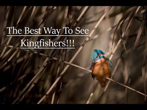 Kingfishers And Other Wildlife On The River Arun!