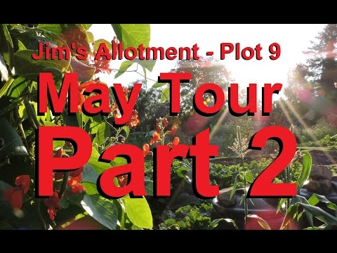 Jim's Allotment - Plot 9 - May Tour Part 2 - Kale, Calendulas, Flower Sprouts and Peppers