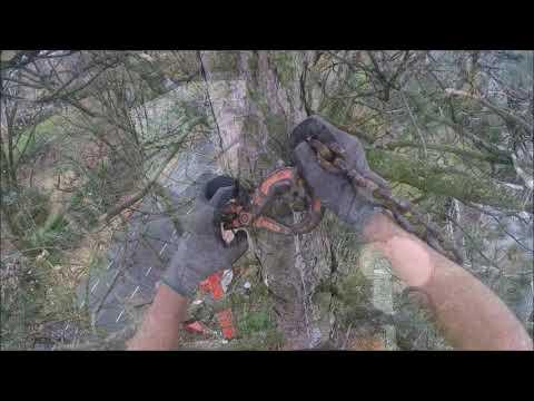 Bomen verwijderen m.b.v.