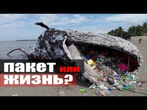 Россия откажется от пакетов в 2025 году \ жирный