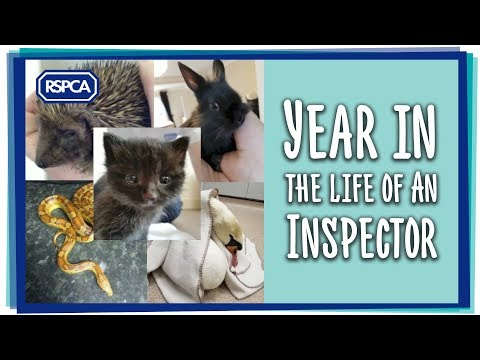 Year in the life of an RSPCA Inspector