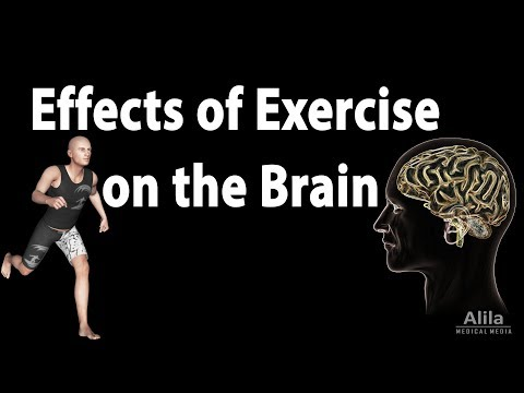 Effects of Exercise on the Brain, Animation
