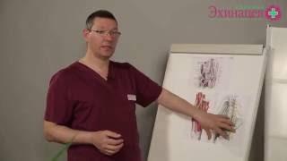 видео ЯГОДИЧНЫЕ МЫШЦЫ. 10 Фактов. Анатомия и Тренировки