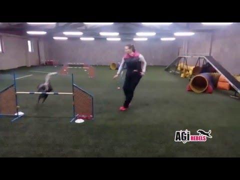Agility tréninky Charlie Agirebels zima 2015/2016