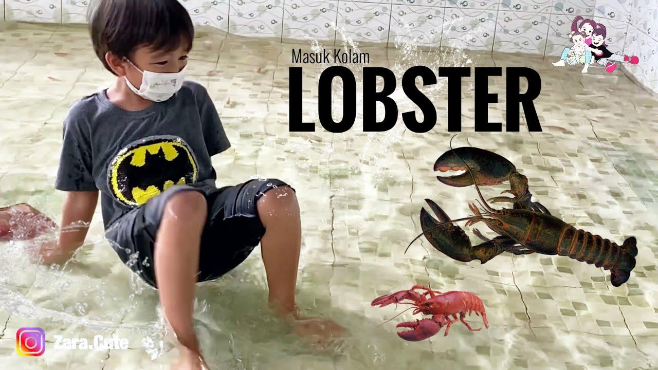 Download Serunya Wisata Tangkap Lobster !!! Belajar Tangkas dan Berani