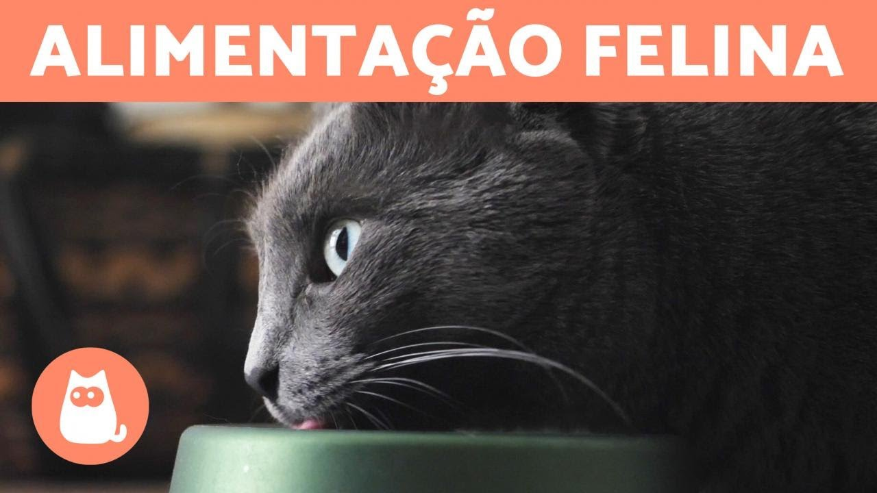 O que os gatos devem comer? 🐱🍗 (Alimentação felina)