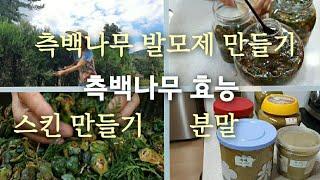 측백나무효능/측백나무잎 발모제 만들기/측백나무열매 스킨…