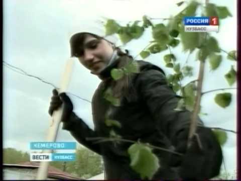 Березовую рощу посадили в Кемерове