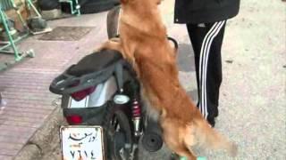 مدرب كلاب محترف 3
