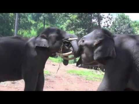 South East Asia Wildlife Trailer