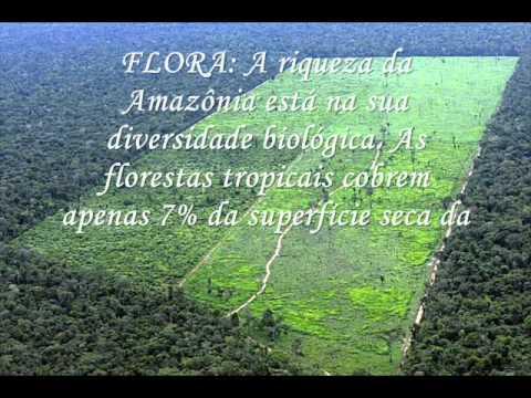PANTANAL & FLORESTA AMAZÔNICA - TRABALHO DE CONCLUSÃO DE CURSO TCC