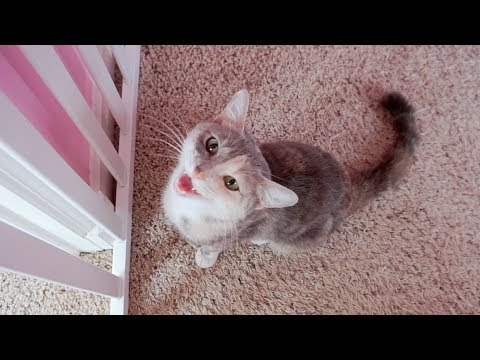 Cute Kitten Thinks It's A Dog! - Cat To Dog Surprise Introduction