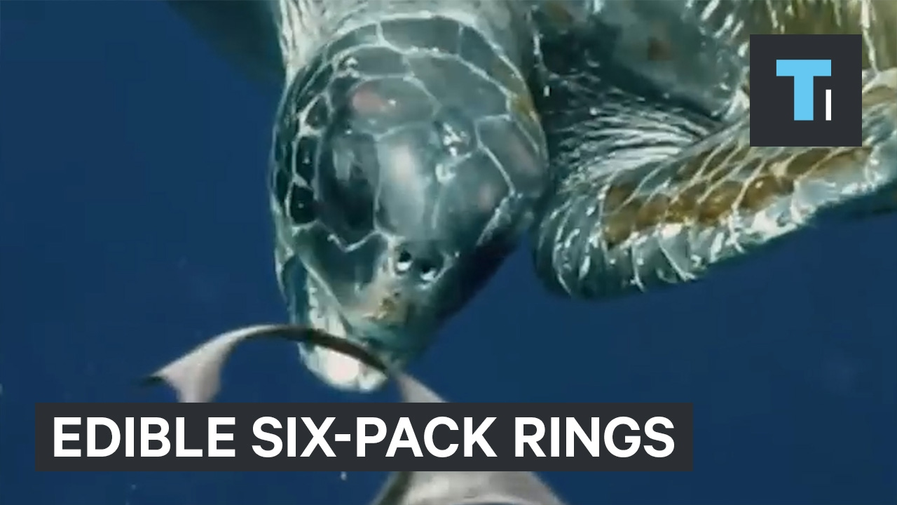 A brewery is making the ocean safer with this new edible packaging