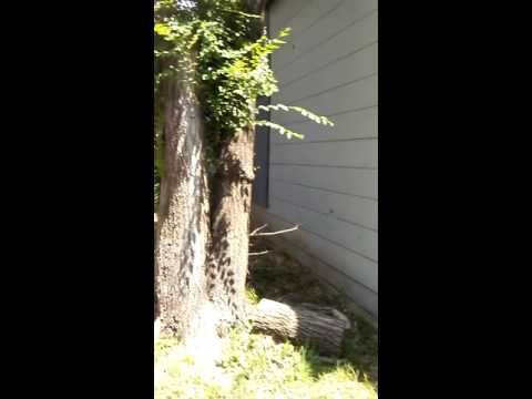 Cheap Fixer Upper House For Sale: $23,000 CASH ONLY$ in Kansas City, Kansas, Wyandotte County