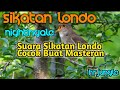 Suara Sikatan Londo Nightingale Buat Masteran  Mp3 - Mp4 Download
