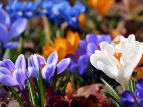 Сочинение на тему весна uchimorg