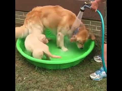 Dog And Puppy Taking Bath Peacefully 😋