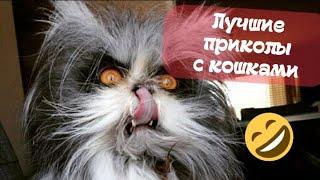 НОВЫЕ ПРИКОЛЫ О ЖИВОТНЫХ FUNNY CATS AND DOGS BEST VIDEOS 2021 8