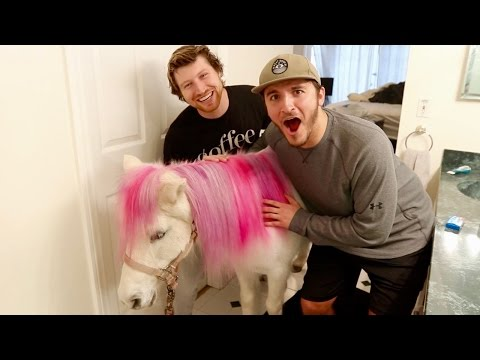 SURPRISING FRIENDS WITH A REAL PONY!!