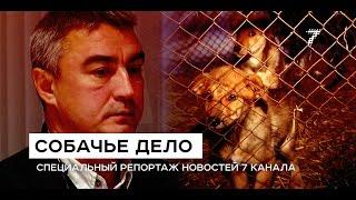 Бездомных собак в Красноярске убивают за бюджетные деньги. «Собачье дело». Спецрепортаж