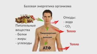 4. АТФ и Энергетика клетки (9 класс) биология, подготовка к ЕГЭ и ОГЭ