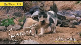『猫は抱くもの』/6月23日(土)公開 公式サイト:http://nekodaku.jp/ ...