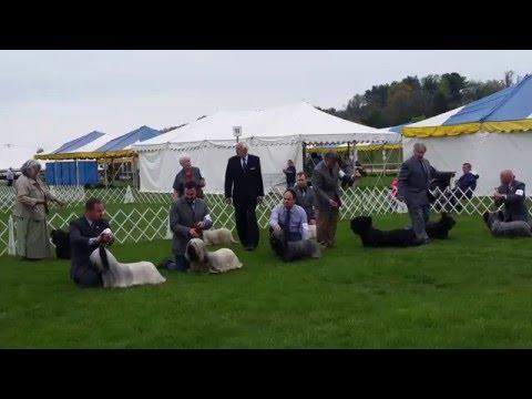 Columbia Terrier Association Of Maryland 2016 - Skye terriers BOB