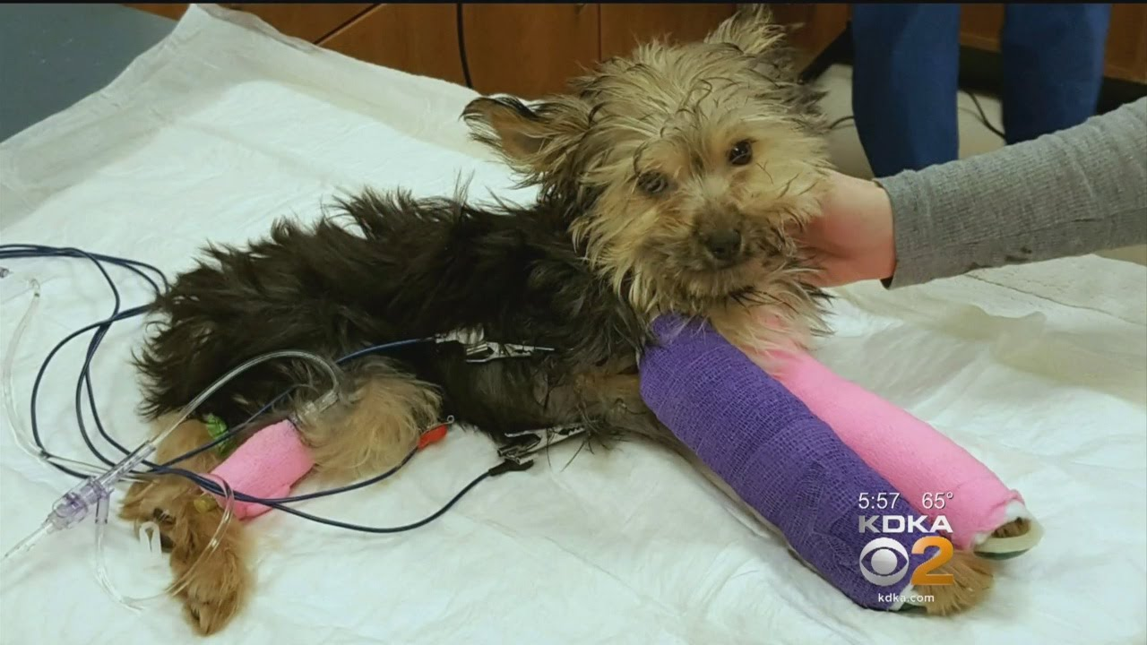 Puppy Abandoned At Animal Shelter With 2 Broken Legs Undergoes