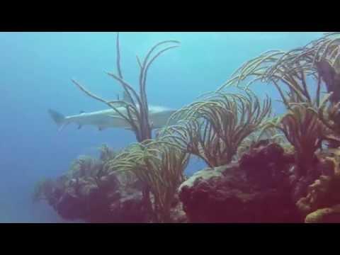 Shark Reef: Gopro 1