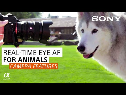 Real-Time Animal Eye AF And Tracking: Animal Photography | Sony Alpha Universe