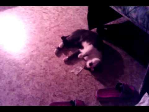 Валерьянка действует на кота