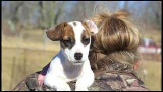Kentucky Canine Training Center - A Photo Essay