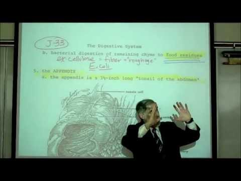 DIGESTIVE SYSTEM; PART 5; THE INTESTINE & ABSORPTION by Professor Fink
