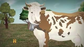 Молочные реки Белоруссия продает России больше молока, чем производит