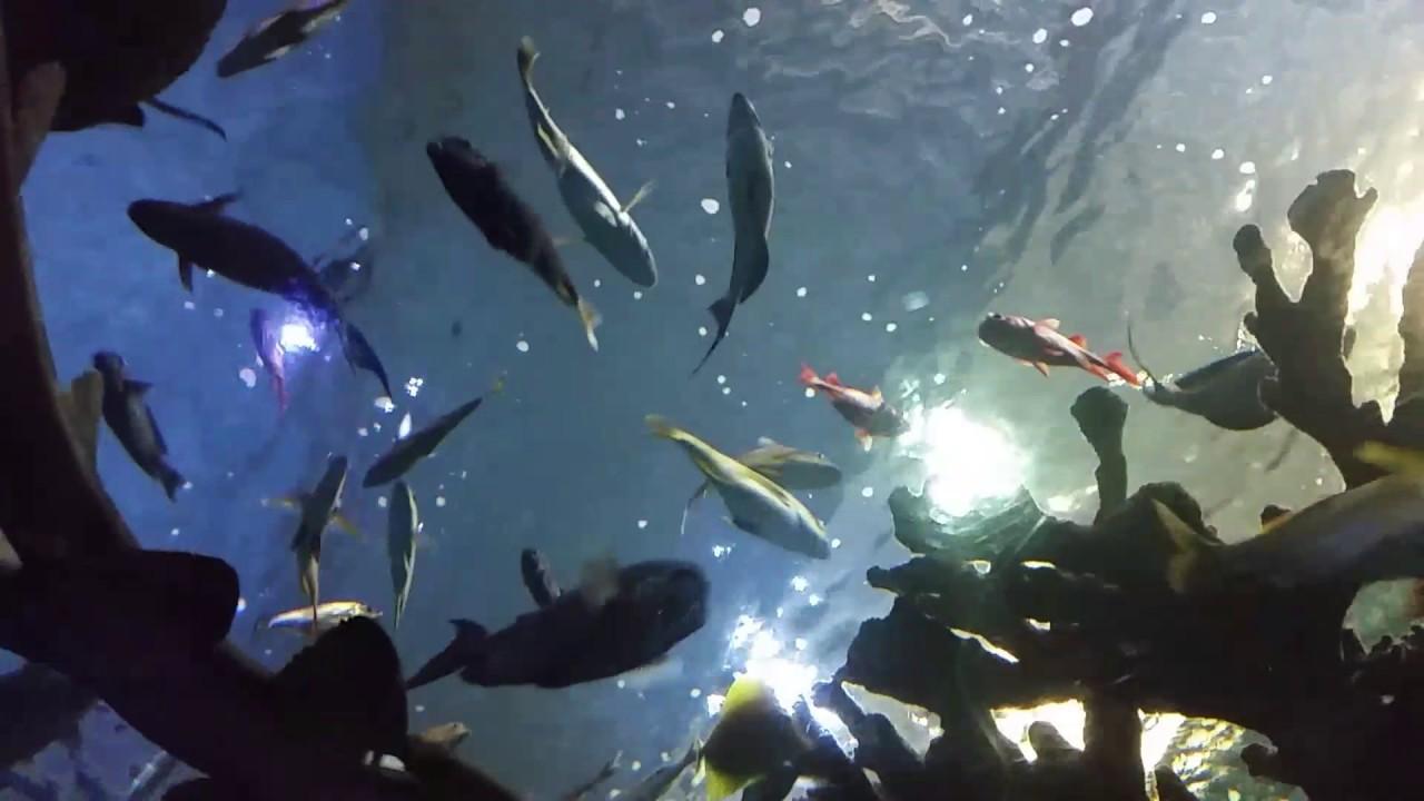 Sea Life Minnesota Aquarium Mall Of America Youtube