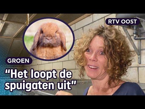 Speeddaten voor konijnen bij Maaike in Beuningen | RTV Oost