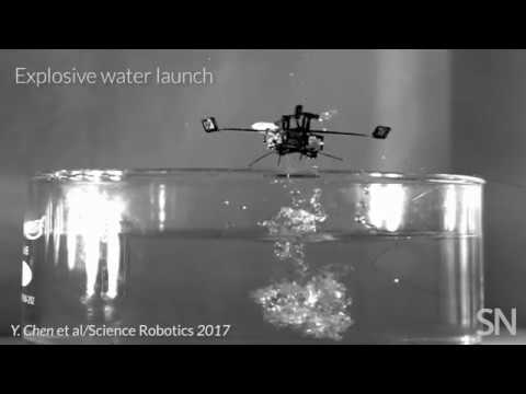 Insect-inspired robot travels by air and water | Science News