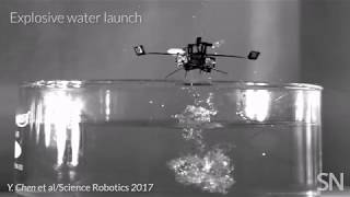 Insect-inspired robot travels by air and water   Science News