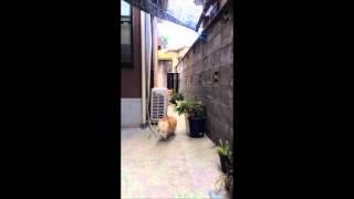 犬好きなコヒメ。幼いがゆえに、何でも楽しいらしい(*^_^*)