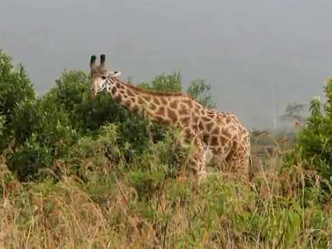 Driving from Kenya to Arusha Tanzania, Africa