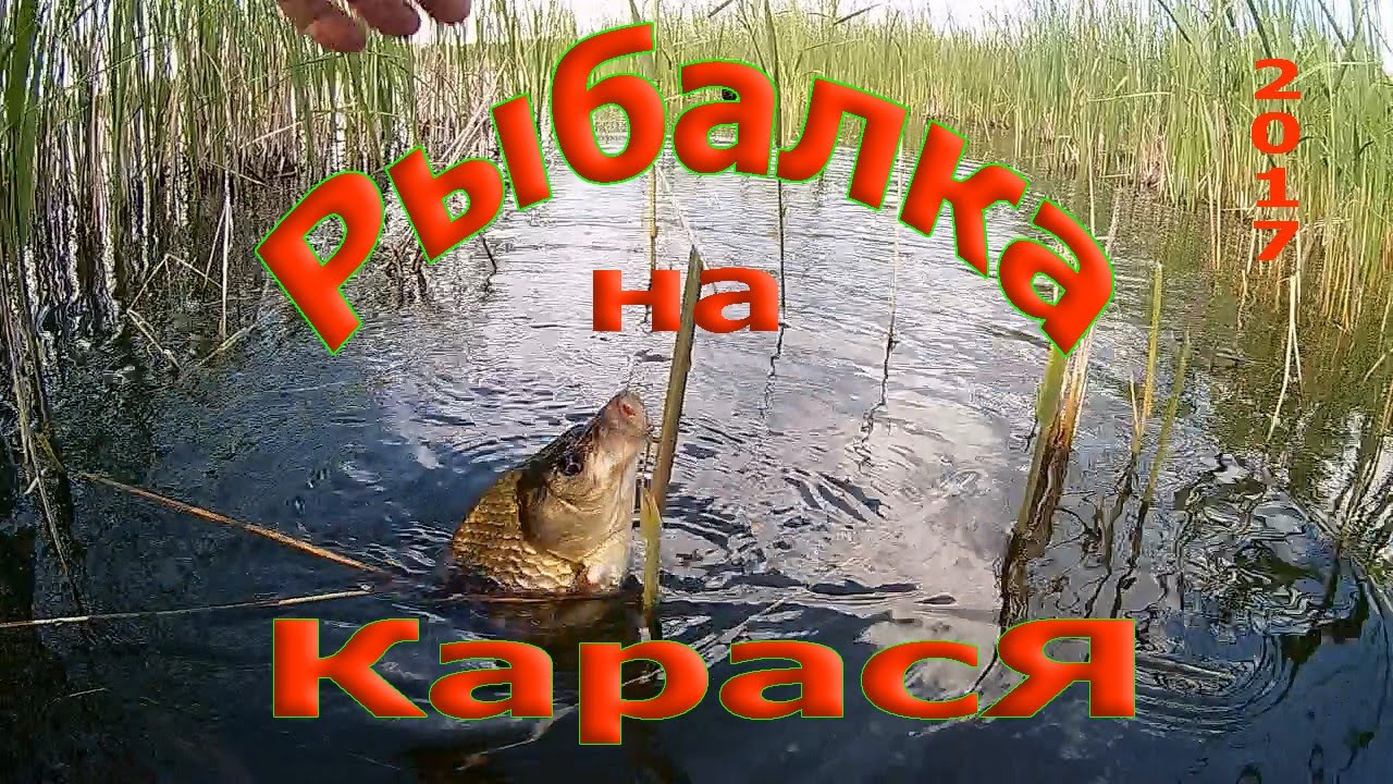 ютуб рыбалка в камышах на карася