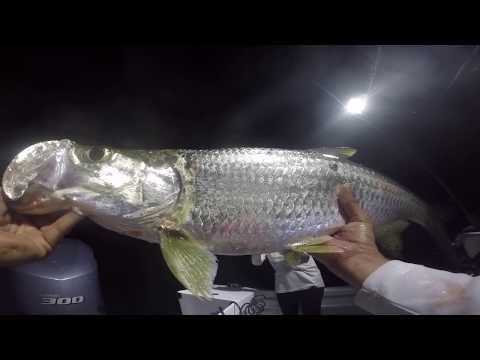 Backcountry Fishing Key Largo, FL EP.2