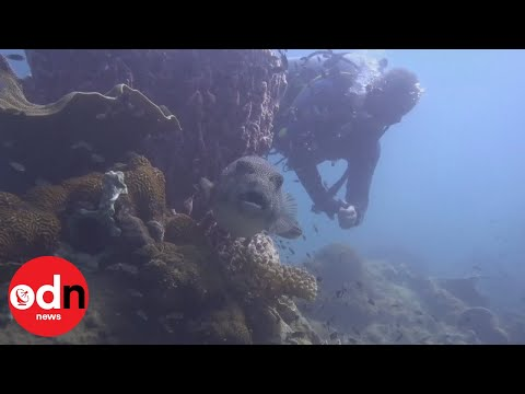 Scientists survey Cambodia's coral reefs for damage