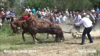 """Фестиваль """"Коні мої, коні"""" 2016 (2 ч., парний розряд)"""