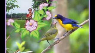 sathe bangla song tumi khacha hole ami hobo pakhi best bangla song -MASUD_SATHE