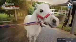 전국 최대·최초의 마(馬) 테마파크 부산 렛츠런파크를 가다!
