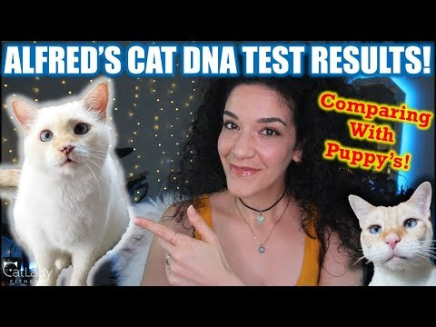 FINALLY revealing Alfred's Cat DNA test (and comparing with Puppy's)!!