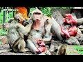 Small Monkey Worry Sasha Carry Newbaby Upside Down  SP BBlover  Jessie Hurt Cry