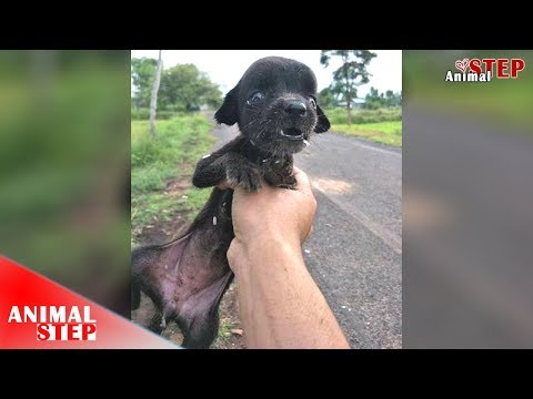 Starving Stray Puppy Ignored From Everyone Finally Is Getting Rescued